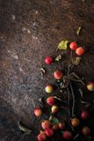 Apple con i ramoscelli e le foglie sul verticale di pietra marrone del fondo Fotografia Stock