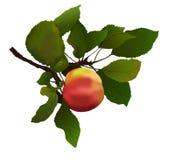 Apple con l'illustrazione delle foglie Fotografia Stock