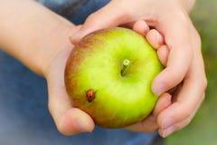 Apple con la mariquita sostenida por un niño Fotos de archivo libres de regalías