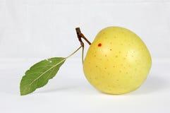 Apple con un prospecto Foto de archivo