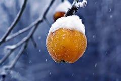 Apple congelado en nieve Foto de archivo