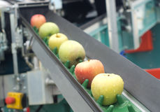 Apple conveyor belt Stock Photos