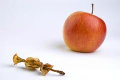 Apple Core Royalty Free Stock Photos