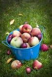 Apple cosecha Foto de archivo libre de regalías