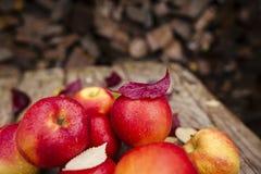 Apple cosecha Fotos de archivo