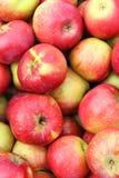 Apple cosecha Fotografía de archivo libre de regalías