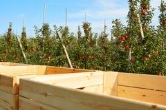 Apple cosecha en el país, Fotos de archivo libres de regalías