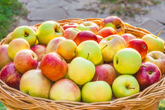 Apple cosecha en una cesta de mimbre, hecha excursionismo Fotografía de archivo