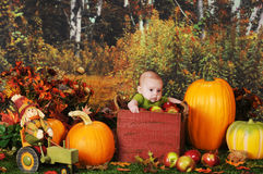 Apple Crate Baby stock image