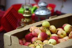 Apple crop spread on the terrace Royalty Free Stock Images