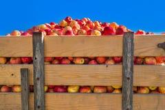 Apple Crop Royalty Free Stock Photos