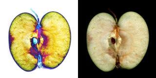 Apple cut scanned image inversion imaging vegetal science Stock Image