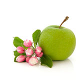 An Apple a Day Royalty Free Stock Photos