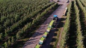 Apple-de boomgaard, oogst van appelen, tractor draagt groot houten dozenhoogtepunt van groene appelen, hoogste mening, aerovideo stock videobeelden