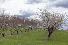 Apple-de Boomgaardlente royalty-vrije stock afbeeldingen