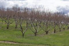 Apple-de Boomgaardlente stock foto's