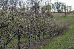 Apple-de Boomgaardlente stock afbeeldingen