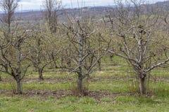 Apple-de Boomgaardlente stock fotografie