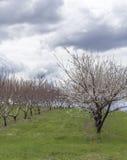 Apple-de Boomgaardlente royalty-vrije stock foto's