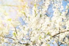 Apple-de close-up van de boombloesem, aard, de lente royalty-vrije stock afbeeldingen