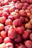 Apple-de fruitachtergrond, nieuwe oogst van rode appelen, sluit omhoog stock afbeeldingen