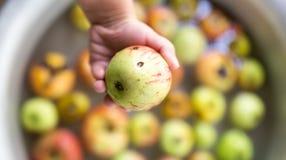 Apple in de kind` s hand stock afbeelding