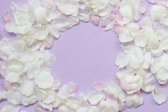 Apple-de rug van de bloembloesem Stock Fotografie