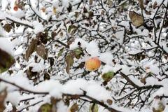Apple debajo de la nieve fotografía de archivo libre de regalías