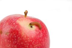 Apple with defect Royalty Free Stock Photography