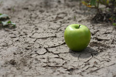 Apple on desert background Royalty Free Stock Images