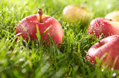 Apple and dew. Apples on the grass with dew stock image