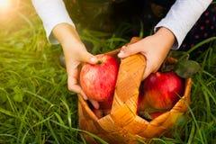 Apple di raccolta stagionale Immagini Stock