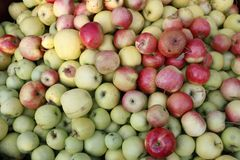 Apple, different kinds. Nature, something the best people can see! enjoy at this image of different apples Stock Photography