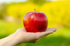 Apple a disposición sale los árboles del fondo verde de la naturaleza del sol Foto de archivo libre de regalías