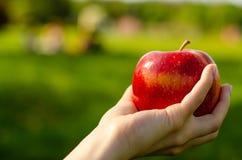 Apple a disposición sale los árboles del fondo verde de la naturaleza del sol Fotos de archivo