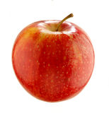 Apple - domestica de malus Photographie stock libre de droits