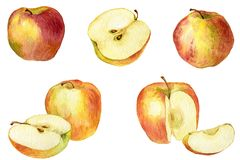 Apple drawing by watercolor Royalty Free Stock Images