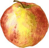 Apple drawing by watercolor Royalty Free Stock Photos