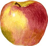 Apple drawing by watercolor Stock Images