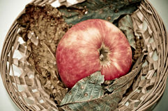 Apple and dry leaves Royalty Free Stock Photos