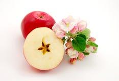Apple e flor da maçã Fotografia de Stock