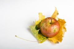 Apple e foglio Fotografie Stock Libere da Diritti