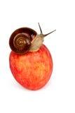 Apple e lumaca Fotografia Stock Libera da Diritti