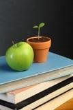 Apple e pianta verdi Immagine Stock