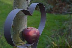 Apple in einem Herzen Stockfoto