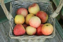 Apple en cesta Foto de archivo libre de regalías