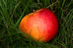 Apple en hierba imágenes de archivo libres de regalías