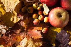 Apple en las hojas de arce Fotos de archivo