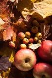 Apple en las hojas de arce Imagenes de archivo