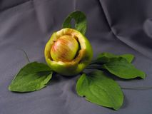 Apple en manzana mordida fotos de archivo libres de regalías